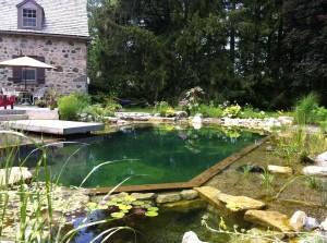 natural-swimming-pool-landscaping-Johns-Pools-Ponds